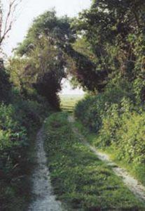 chemin-de-randonee-en-Baie-du-Mont-Saint-Michel