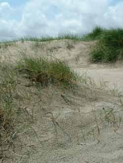 Les Dunes de Dragey en Baie du Mont-Saint-Michel