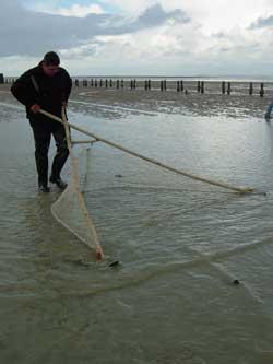 Un drôle d'outil pour pêcher en Baie : la bichette - Baie Mont Saint Michel